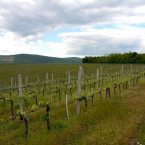Egri Borászok Fóruma: 29 millió eurós támogatás