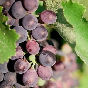 A Balatoni Nyár fókuszában az egri borospalack