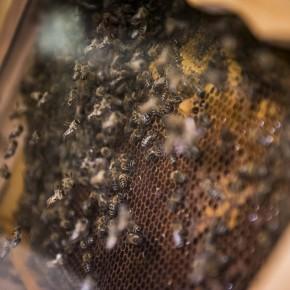 Szövetségben a méhészekkel